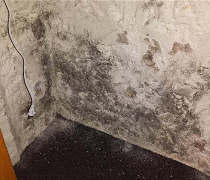 Mold on Basement Wall in Fort Atkinson, WI Before
