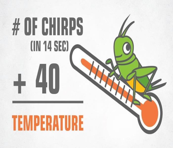 General Cricket Chirps & Outside Temperature
